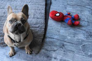 hondenmand franse bulldog